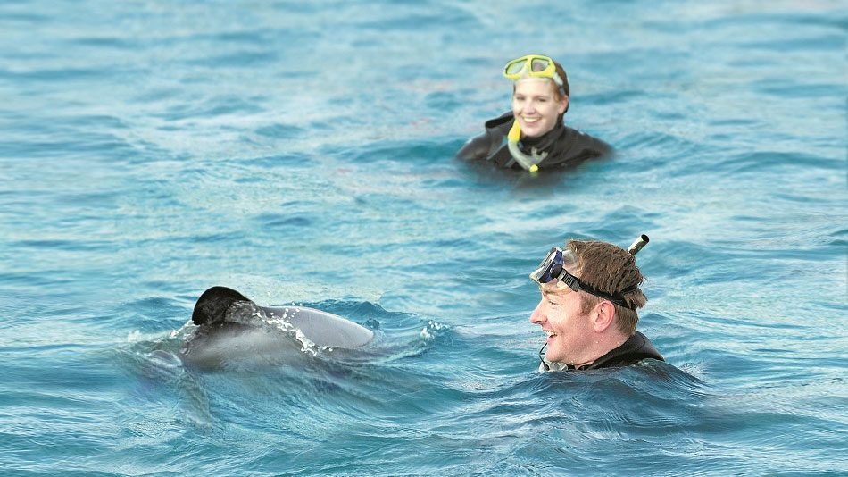 Swimming with the Dolphins Akaroa