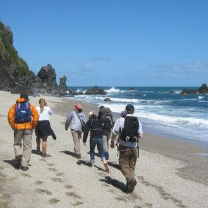 Beautiful beach walk