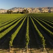 Awatere Vineyards